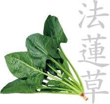 Japanese spinach