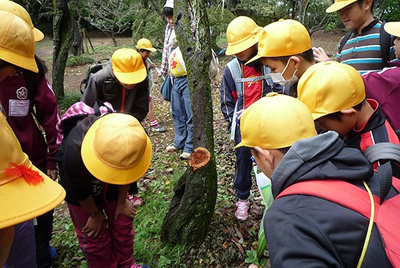 Ecological Learning (October 2014 at Shimizu Park)